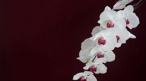 Превью обои орхидея, белая, ветка, фон