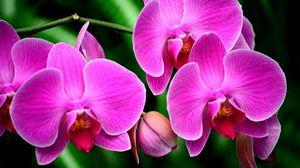 Превью обои орхидея, цветок, ветка, экзотика