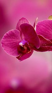 Превью обои орхидея, цветок, лепестки, розовый