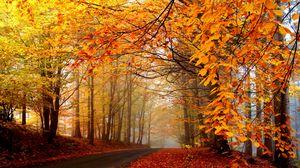 Превью обои осень, деревья, дорога, туман, дымка, асфальт, листья, желтые, ярко