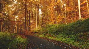 Превью обои осень, деревья, лес, тропинка