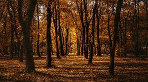 Превью обои осень, лес, деревья, парк, тропинка