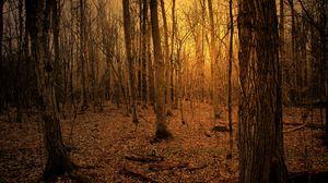 Превью обои осень, лес, деревья