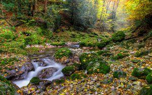 Превью обои осень, лес, речка, камни, пейзаж