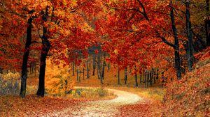 Превью обои осень, лес, тропинка, листва, парк, красочный