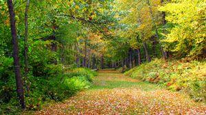 Превью обои осень, листва, деревья