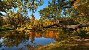 Превью обои осень, пруд, деревья, пейзаж