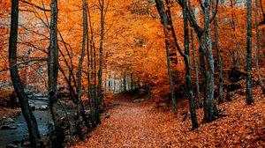 Превью обои осень, тропинка, листва, лес, деревья, осенние краски
