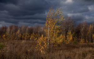 Превью обои осень, тучи, деревья, природа