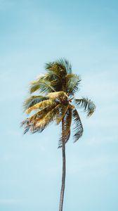 Превью обои пальма, дерево, листья, тропики, минимализм