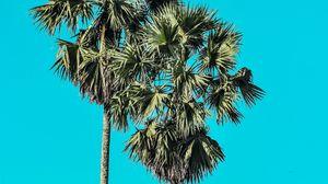 Превью обои пальмы, деревья, лето, минимализм