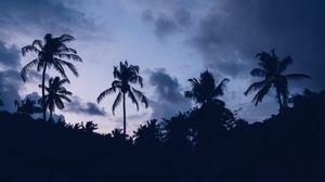 Превью обои пальмы, ночь, облака