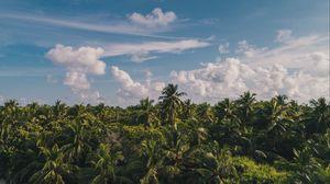 Превью обои пальмы, облака, небо, тропики