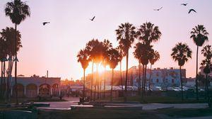 Превью обои пальмы, рассвет, птицы, венис бич, лос-анджелес, сша