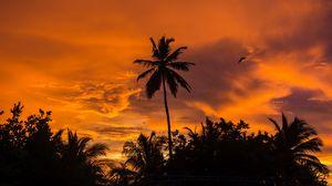 Превью обои пальмы, закат, тропики, небо, облака
