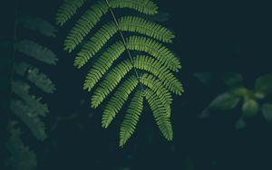 Превью обои папоротник, лист, растение, зеленый
