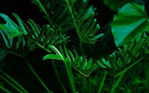 Превью обои растение, листья, зеленый, экзотический