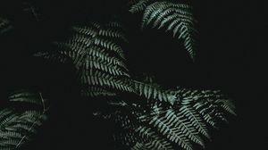 Превью обои папоротник, темный, темнота, растение, листья
