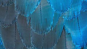 Превью обои перья, синий, переливающийся, макро, текстура