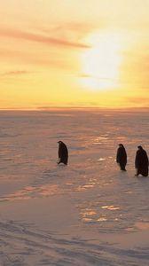 Превью обои пингвины, север, рассвет, зима, лёд, снег