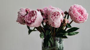 Превью обои пионы, цветы, букет, розовый, ваза