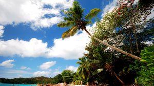 Превью обои пляж, песок, пальмы, берег