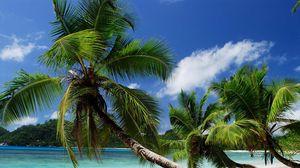 Превью обои пляж, тропики, море, песок, пальмы, песчаный