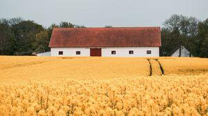 Превью обои поле, цветы, желтый, здание