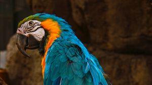 Превью обои попугай, ара, птица, голубой