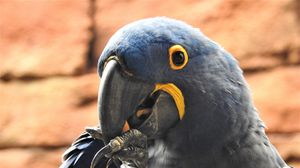 Превью обои попугай, клюв, птица
