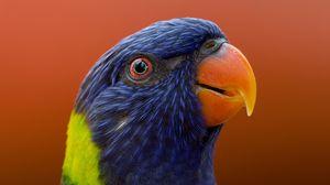 Превью обои попугай, птица, клюв, дикая природа, экзотический