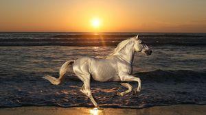 Превью обои природа, жеребец, лошадь, животные, скачет, конь, море