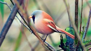 Превью обои птица, красивая, сидеть, окрас