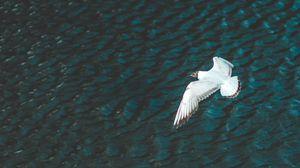 Превью обои птица, полет, река, крылья
