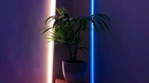 Превью обои растение, горшок, неон, подсветка, декоративный