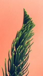 Превью обои растение, иголки, ветки, минимализм, стена