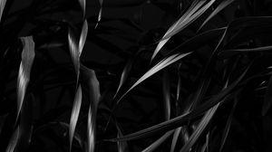 Превью обои растение, листья, черный, чб