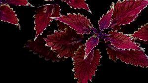 Превью обои растение, листья, резной, контраст