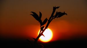 Превью обои растение, закат, природа, небо