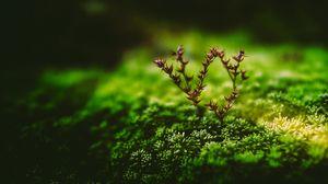 Превью обои растение, зеленый, ветка, крошечный, макро