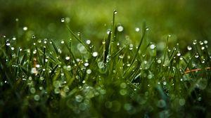 Превью обои роса, блики, трава, капли, макро