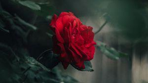 Превью обои роза, бутон, красный, размытость, лепестки