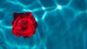 Превью обои роза, бутон, вода, красный