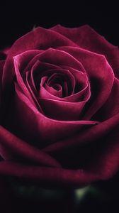 Превью обои роза, цветок, крупным планом, лепестки