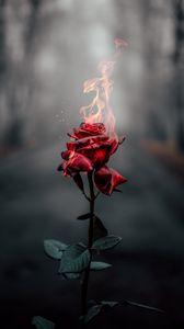Превью обои роза, цветок, огонь, пламя, гореть