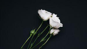 Превью обои розы, букет, белый, черный фон