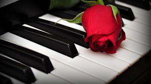 Превью обои розы, цветок, клавиши, пианино