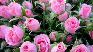 Превью обои розы, цветы, букет, нежные, бутоны