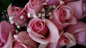 Превью обои розы, цветы, розовые, гипсофил, букет, бутоны