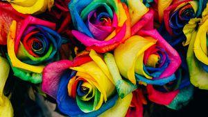 Превью обои розы, разноцветный, радужный